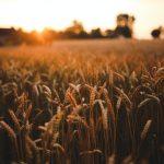 Medidas de Flexibilización de Empleo Agrario por COVID19